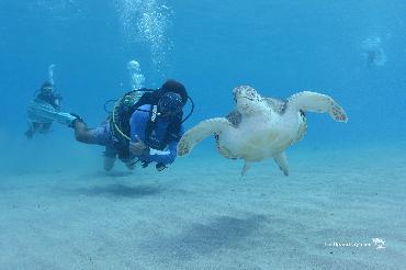 Curacao: A Diver\'s Paradise