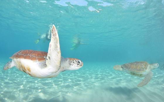 Westpunt - 2 Schildpadden en 2 snorkelaars