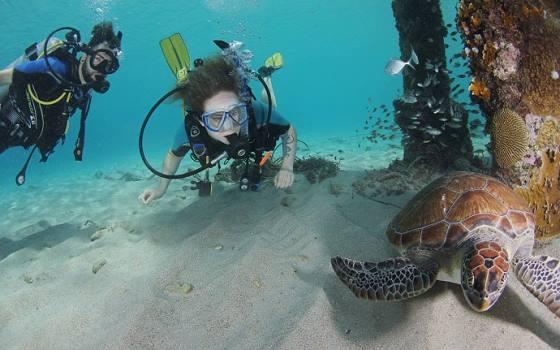 Westpunt - 2 duikers en 1 schildpad