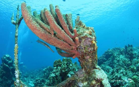 Westpunt - Mooi koraal