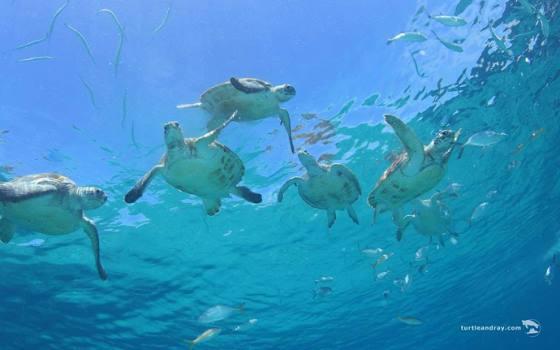 Westpunt - schildpadden