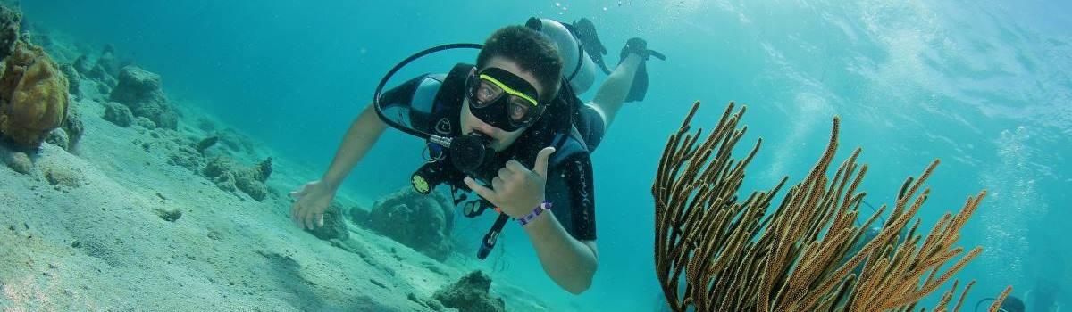 Duiker geniet van het onderwaterleven van Curacao
