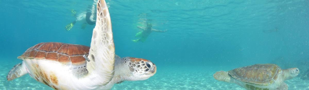 Westpunt Trip - Snorkeling en duiken