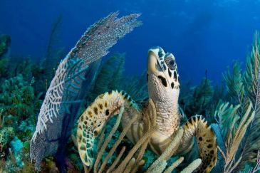 The Best Scuba Diving Destinations in the Caribbean